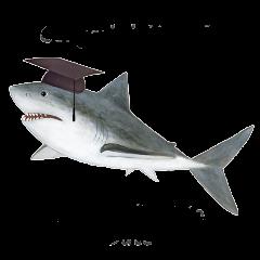shark-grad