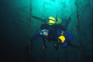 SMBK-kelp-Ocean-1024x677