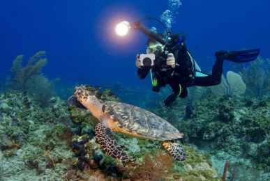 A young SCUBA diver using her underwater camera to photography a sea turtle so she can share with her friends her experiences while diving. Submitted by Michael Eversmier